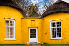 Derrymore-house-bessbrook-daffodils-2