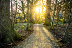 Derrymore-woods-march-2021-2