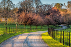 Derrymore-woods-march-2021-3