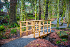 Derrymore-woods-march-2021-5
